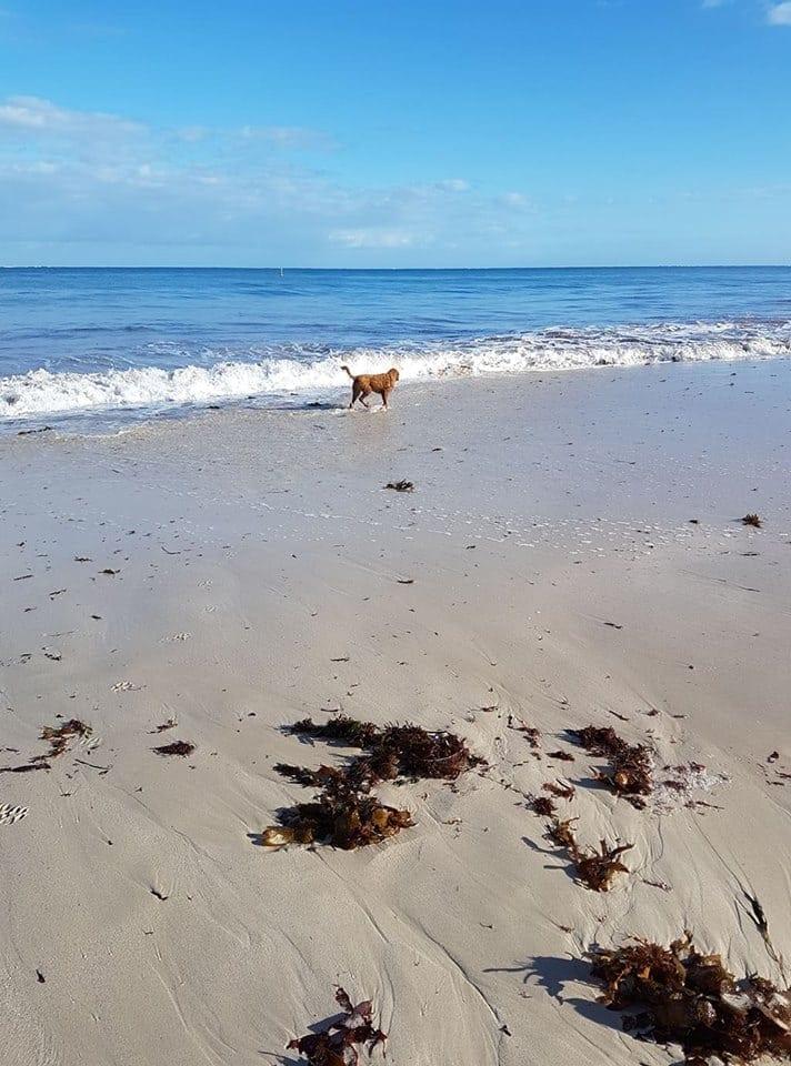 Chippy's Beach Shack, Jindalee