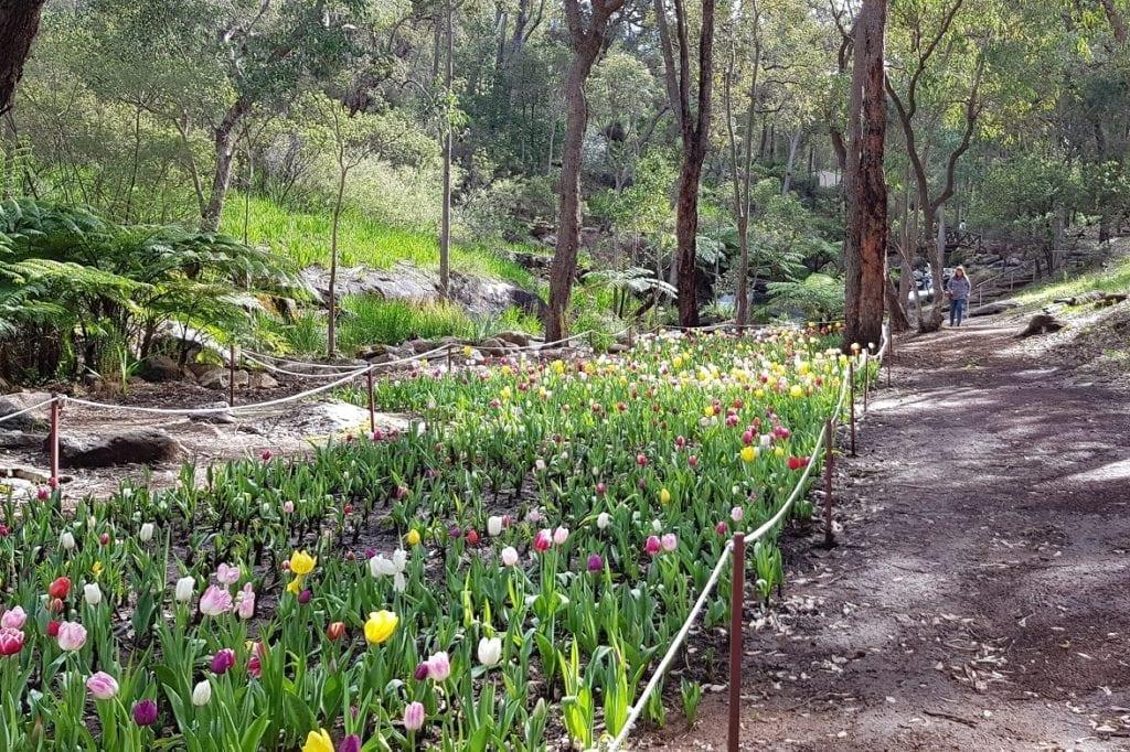 Araluen Botanical Park, Roleystone