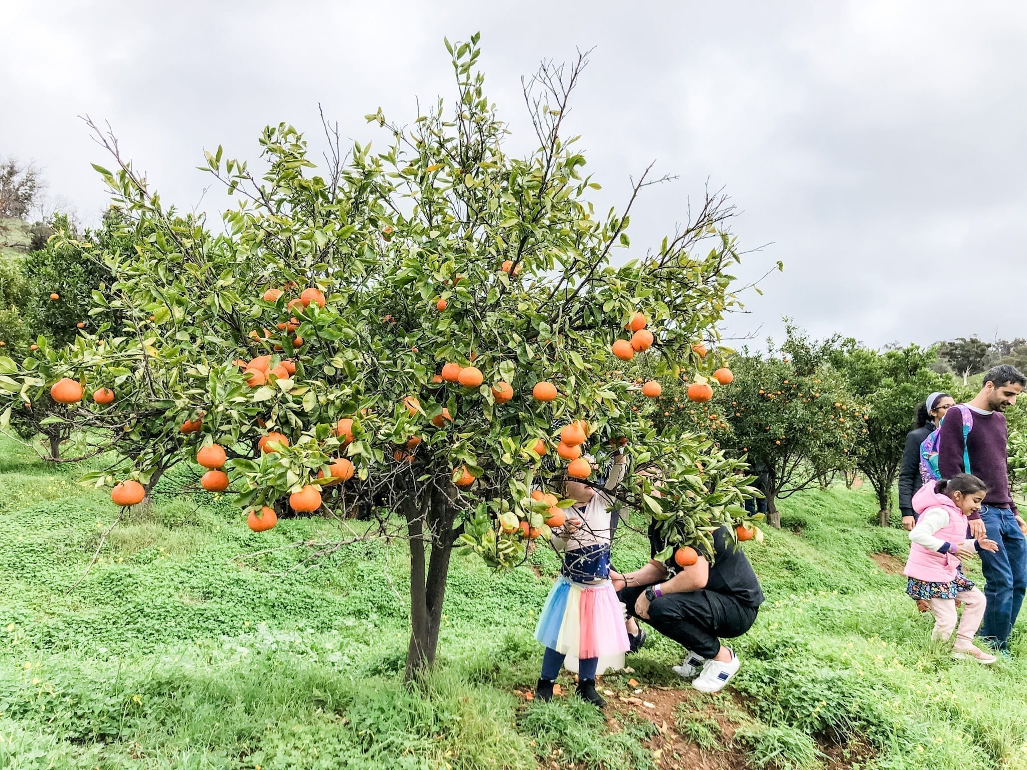 Golden Grove Orchard