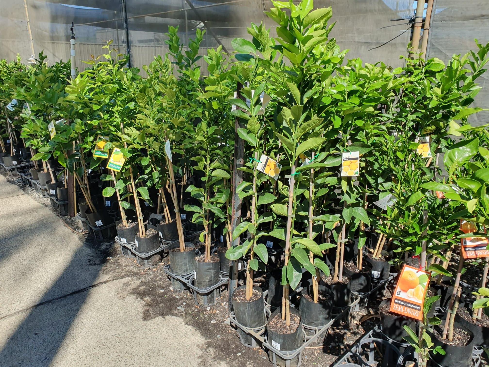Landsdale Plants